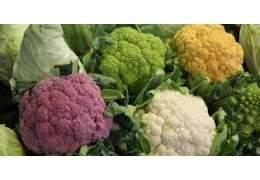Brassicacee (Cavolfiore, Cavolo, Broccolo Romanesco) : prevenzione e difesa dalle principali malattie crittogamiche e dagli insetti